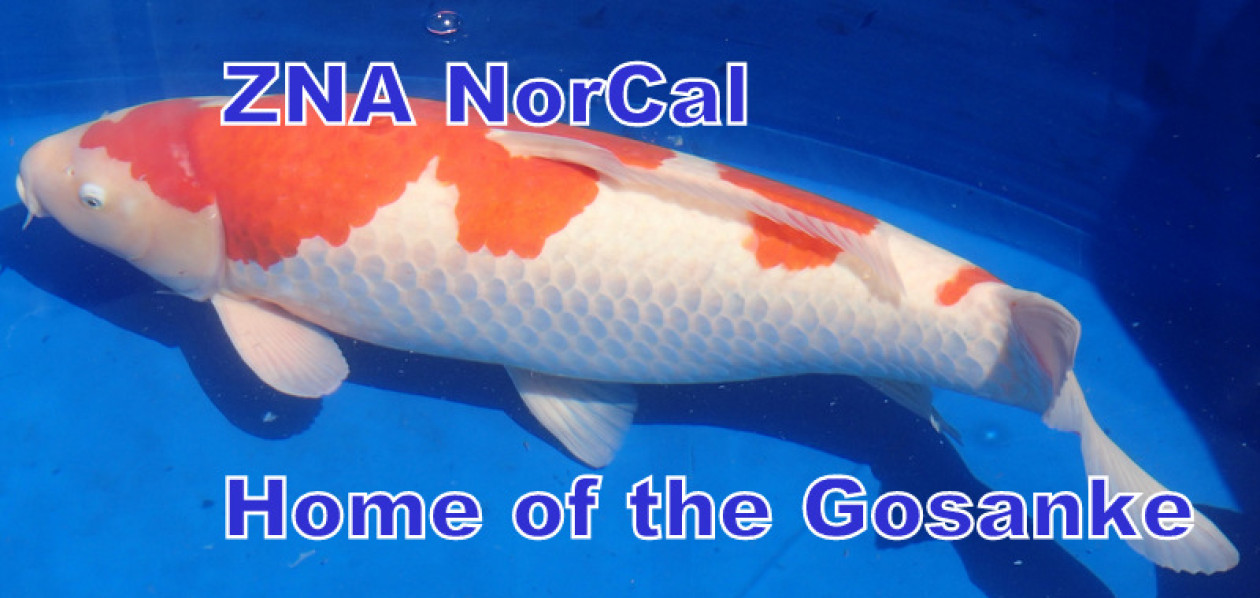 ZNA NorCal